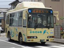 kawasemi20170811.jpg