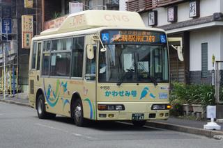 kawasemi20180729_1.jpg