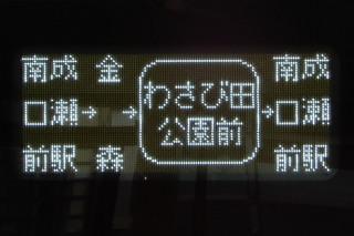 kawasemi20190210_1.jpg