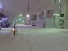snow20180122_3.jpg
