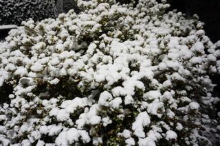 snow20190209_2.jpg