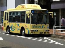kawasemi20111211.jpg