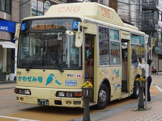 kawasemi20180318_4.jpg