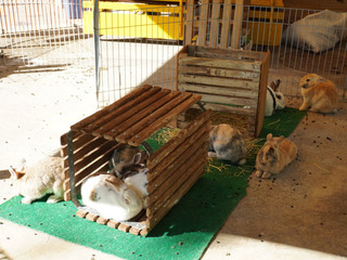 町田リス園のウサギ