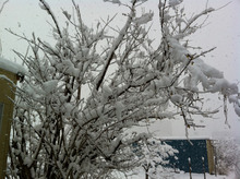 machidasnow20120229_4.jpg