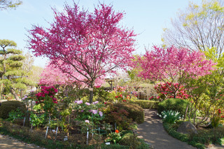 peony-garden201190416_7.jpg