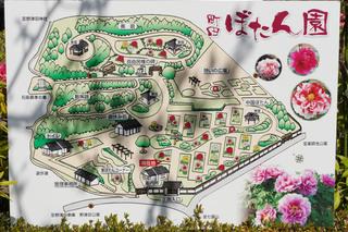 peony-garden201190416_8.jpg