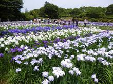 sagamihara-park20170604_1.jpg