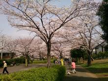 sakura20140401_2.jpg