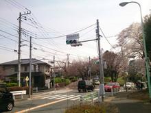 sakura20140401_7.jpg