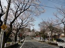 sakura20140402_2.jpg