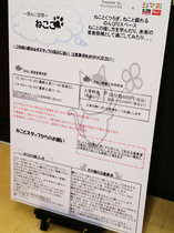 shimachu20170425_6.jpg
