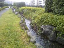 shimomori-seseragi20080612_5.jpg