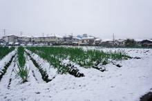 snow20161124_1.jpg