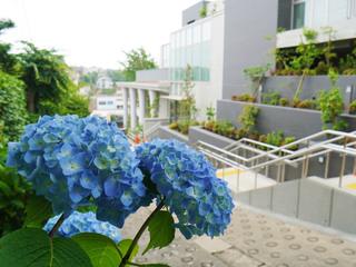 tamagawa20210520_10.jpg