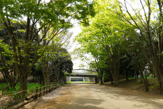tsuruma-park20160416.jpg
