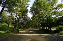 tsuruma-park20161202_1.jpg
