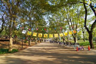 tsuruma-park20191102_1.jpg