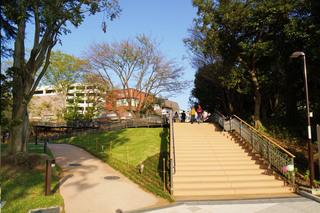tsuruma-park20191102_5.jpg