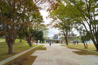 tsuruma-park20191112.jpg