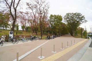 tsuruma-park20191113_1.jpg