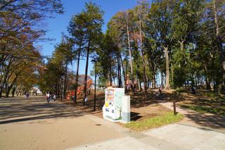 tsuruma-park20191121_2.jpg
