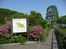 tsurumigawa20080629_2.jpg