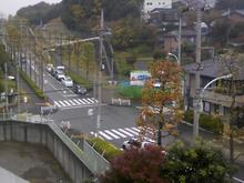 yakushidai20070512_2.jpg