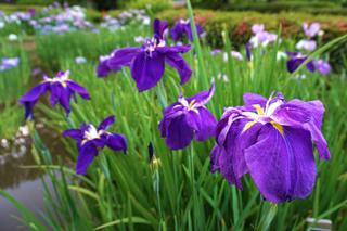 yakushiike-flower20190527_1.jpg