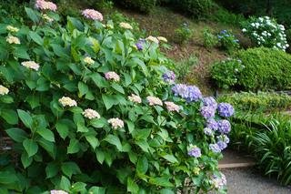 yakushiike-flower20210601_3.jpg