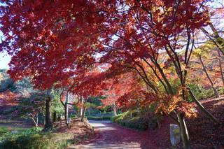 yakushiike20191030_5.jpg