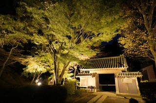 yakushiike20191116_4.jpg
