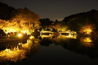 yakushiike20201101_2.jpg