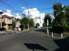 yanagi20130904_1.jpg